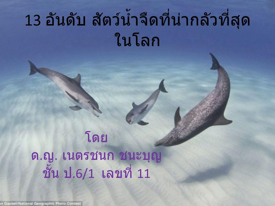 13 อันดับ สัตว์น้ำจืดที่น่ากลัวที่สุด ในโลก โดย ด. ญ. เนตรชนก ชนะบุญ ชั้น ป.6/1 เลขที่ 11