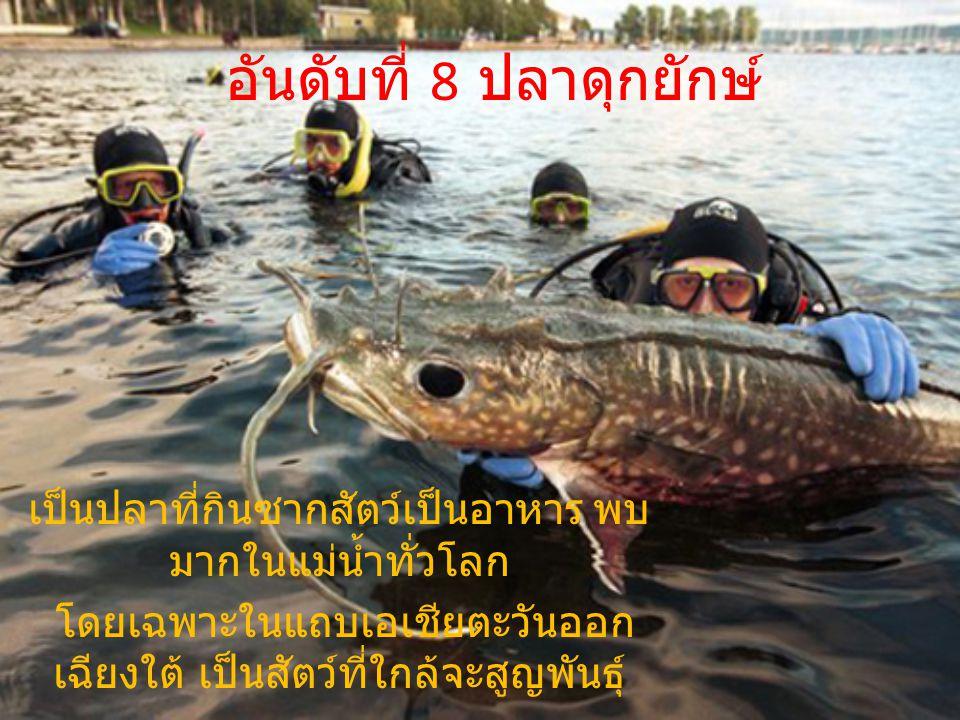 อันดับที่ 8 ปลาดุกยักษ์ เป็นปลาที่กินซากสัตว์เป็นอาหาร พบ มากในแม่น้ำทั่วโลก โดยเฉพาะในแถบเอเชียตะวันออก เฉียงใต้ เป็นสัตว์ที่ใกล้จะสูญพันธุ์