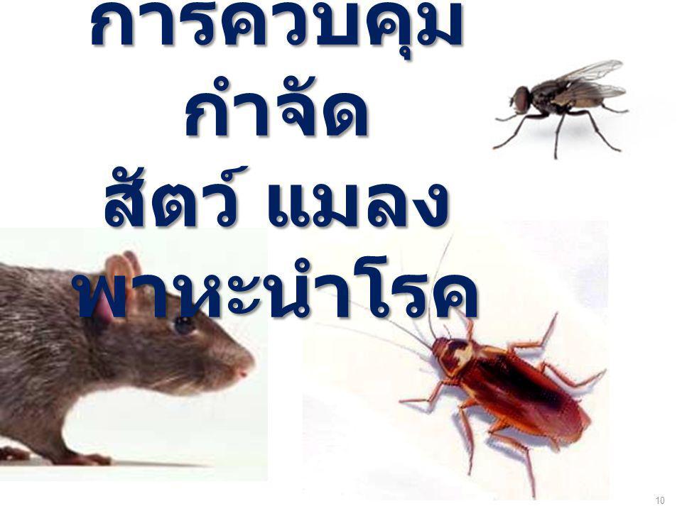 การควบคุม กำจัด สัตว์ แมลง พาหะนำโรค 10