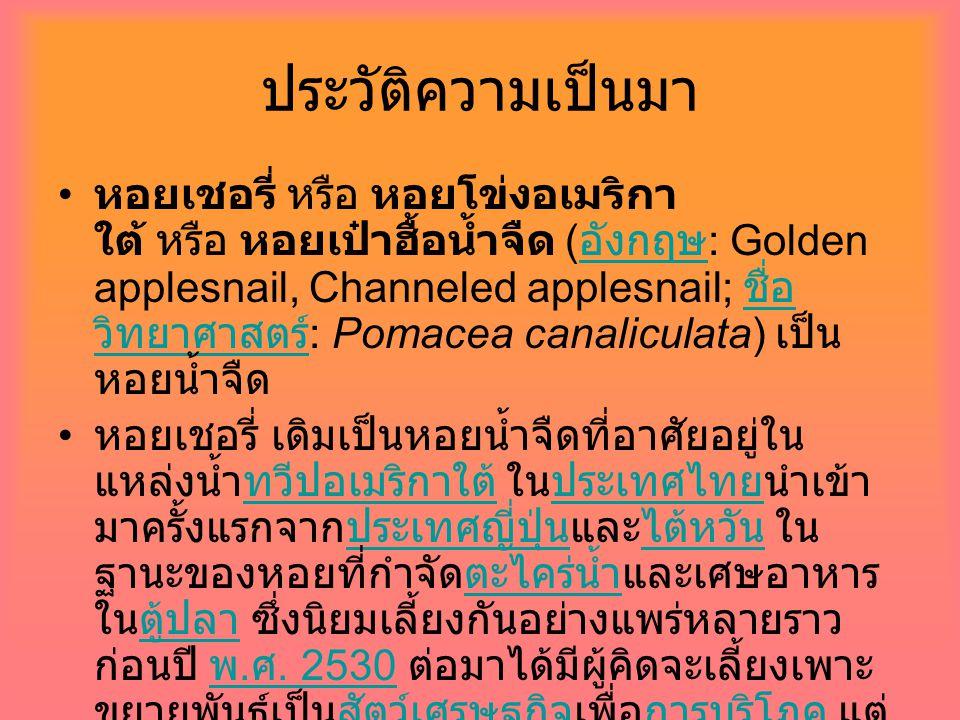 ประวัติความเป็นมา หอยเชอรี่ หรือ หอยโข่งอเมริกา ใต้ หรือ หอยเป๋าฮื้อน้ำจืด ( อังกฤษ : Golden applesnail, Channeled applesnail; ชื่อ วิทยาศาสตร์ : Poma