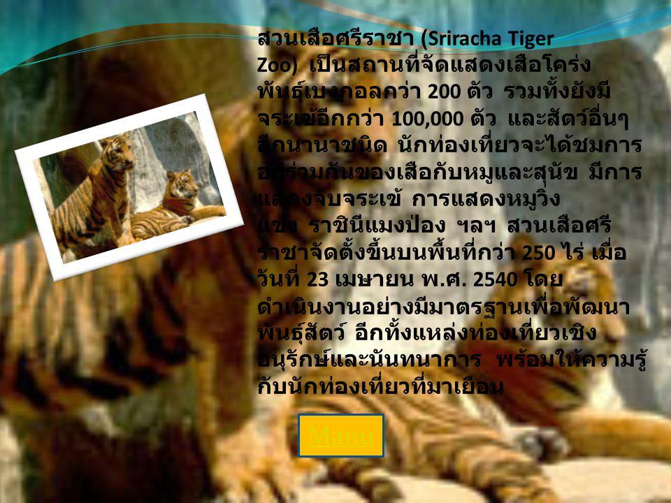 สวนเสือศรีราชา สวนเสือศรีราชา (Sriracha Tiger Zoo) เป็นสถานที่จัดแสดงเสือโคร่ง พันธุ์เบงกอลกว่า 200 ตัว รวมทั้งยังมี จระเข้อีกกว่า 100,000 ตัว และสัตว์อื่นๆ อีกนานาชนิด นักท่องเที่ยวจะได้ชมการ อยู่ร่วมกันของเสือกับหมูและสุนัข มีการ แสดงจับจระเข้ การแสดงหมูวิ่ง แข่ง ราชินีแมงป่อง ฯลฯ สวนเสือศรี ราชาจัดตั้งขึ้นบนพื้นที่กว่า 250 ไร่ เมื่อ วันที่ 23 เมษายน พ.