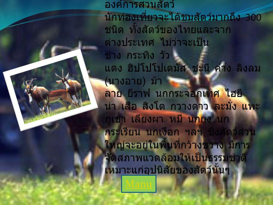 สวนสัตว์เปิดเขาเขียว สวนสัตว์เปิดเขาเขียว เป็นป่าแห่ง เดียวของชลบุรี ดำเนินงานโดย องค์การสวนสัตว์ นักท่องเที่ยวจะได้ชมสัตว์มากถึง 300 ชนิด ทั้งสัตว์ของไทยและจาก ต่างประเทศ ไม่ว่าจะเป็น ช้าง กระทิง วัว แดง ฮิปโปโปเตมัส ชะนี ค่าง ลิงลม ( นางอาย ) ม้า ลาย ยีราฟ นกกระจอกเทศ ไฮยี น่า เสือ สิงโต กวางดาว ละมั่ง แพะ ภูเขา เลียงผา หมี นกยูง นก กระเรียน นกเงือก ฯลฯ ซึ่งสัตว์ส่วน ใหญ่จะอยู่ในพื้นที่กว้างขวาง มีการ จัดสภาพแวดล้อมให้เป็นธรรมชาติ เหมาะแก่อุปนิสัยของสัตว์นั้นๆ Manu