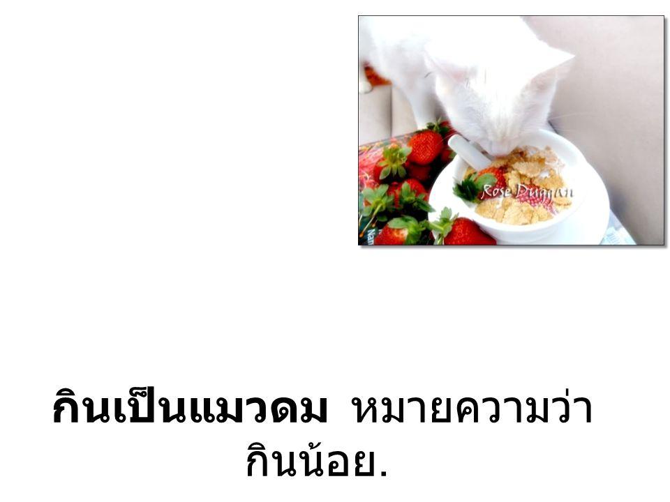 กินเป็นแมวดม หมายความว่า กินน้อย.