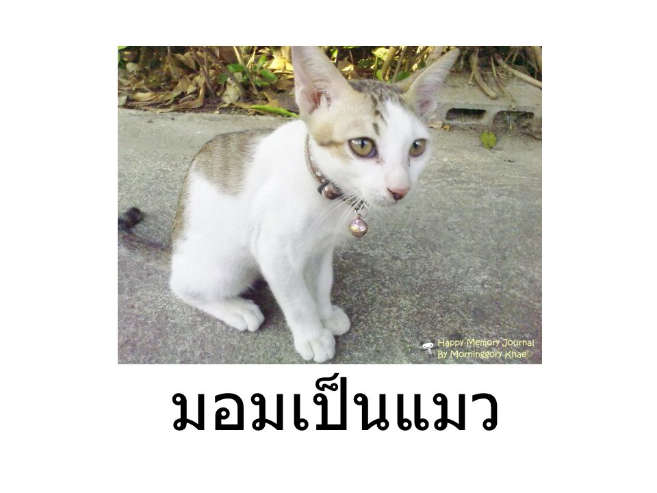มอมเป็นแมว เป็นสำนวน หมายความว่า ขะมุกขะมอม สกปรกเหมือนกับ แมว ที่เปรียบดังนี้เพราะเเมวเป็น สัตว์ที่ชอบอยู่ในที่อบอุ่น