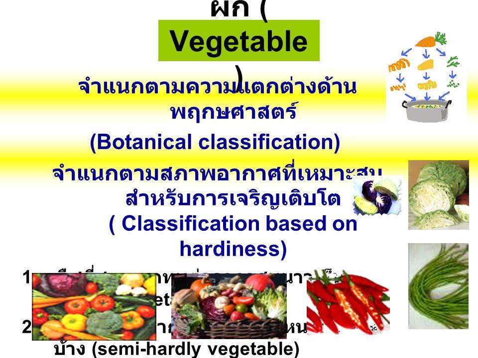 ผัก ( Vegetable ) จำแนกตามความแตกต่างด้าน พฤกษศาสตร์ (Botanical classification) จำแนกตามสภาพอากาศที่เหมาะสม สำหรับการเจริญเติบโต ( Classification base