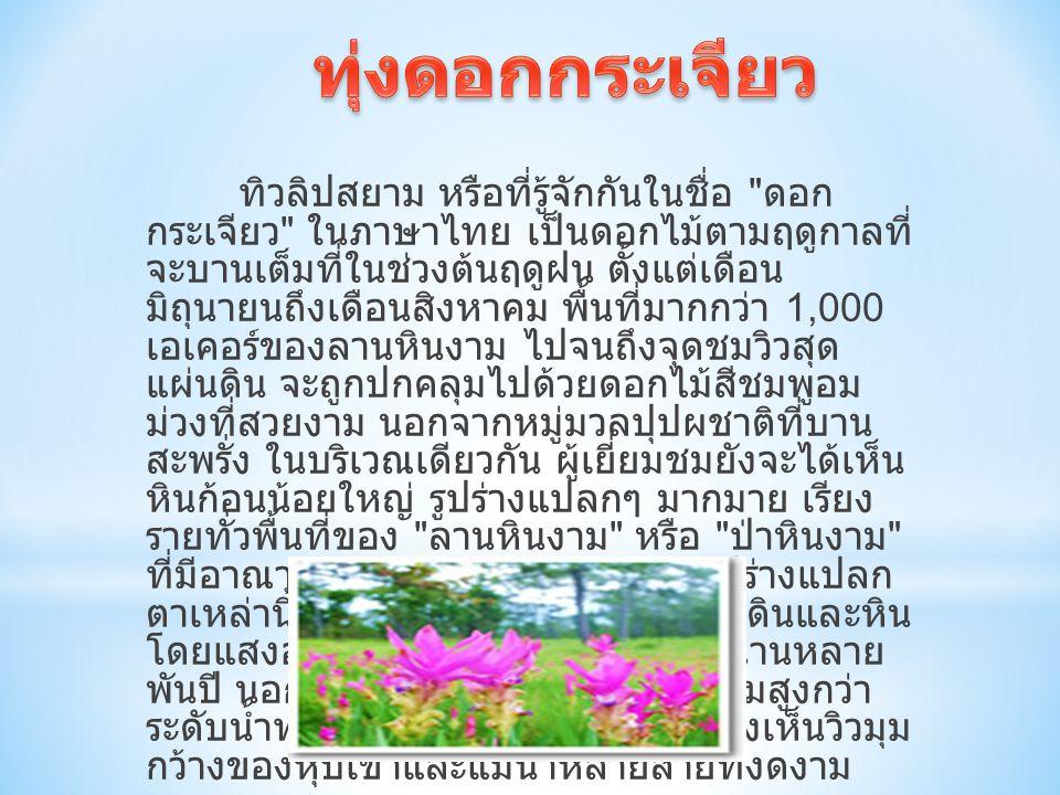 ทิวลิปสยาม หรือที่รู้จักกันในชื่อ ดอก กระเจียว ในภาษาไทย เป็นดอกไม้ตามฤดูกาลที่ จะบานเต็มที่ในช่วงต้นฤดูฝน ตั้งแต่เดือน มิถุนายนถึงเดือนสิงหาคม พื้นที่มากกว่า 1,000 เอเคอร์ของลานหินงาม ไปจนถึงจุดชมวิวสุด แผ่นดิน จะถูกปกคลุมไปด้วยดอกไม้สีชมพูอม ม่วงที่สวยงาม นอกจากหมู่มวลปุปผชาติที่บาน สะพรั่ง ในบริเวณเดียวกัน ผู้เยี่ยมชมยังจะได้เห็น หินก้อนน้อยใหญ่ รูปร่างแปลกๆ มากมาย เรียง รายทั่วพื้นที่ของ ลานหินงาม หรือ ป่าหินงาม ที่มีอาณาบริเวณมากกว่า 10 ไร่ หินรูปร่างแปลก ตาเหล่านี้ เกิดจากการกัดเซาะของเนื้อดินและหิน โดยแสงอาทิตย์ ลม และฝนเป็นเวลานานหลาย พันปี นอกจากนี้ที่นี่ยังมีหน้าผาที่มีความสูงกว่า ระดับน้ำทะเล 846 เมตร ที่สามารถมองเห็นวิวมุม กว้างของหุบเขาและแม่น้ำหลายสายที่งดงาม
