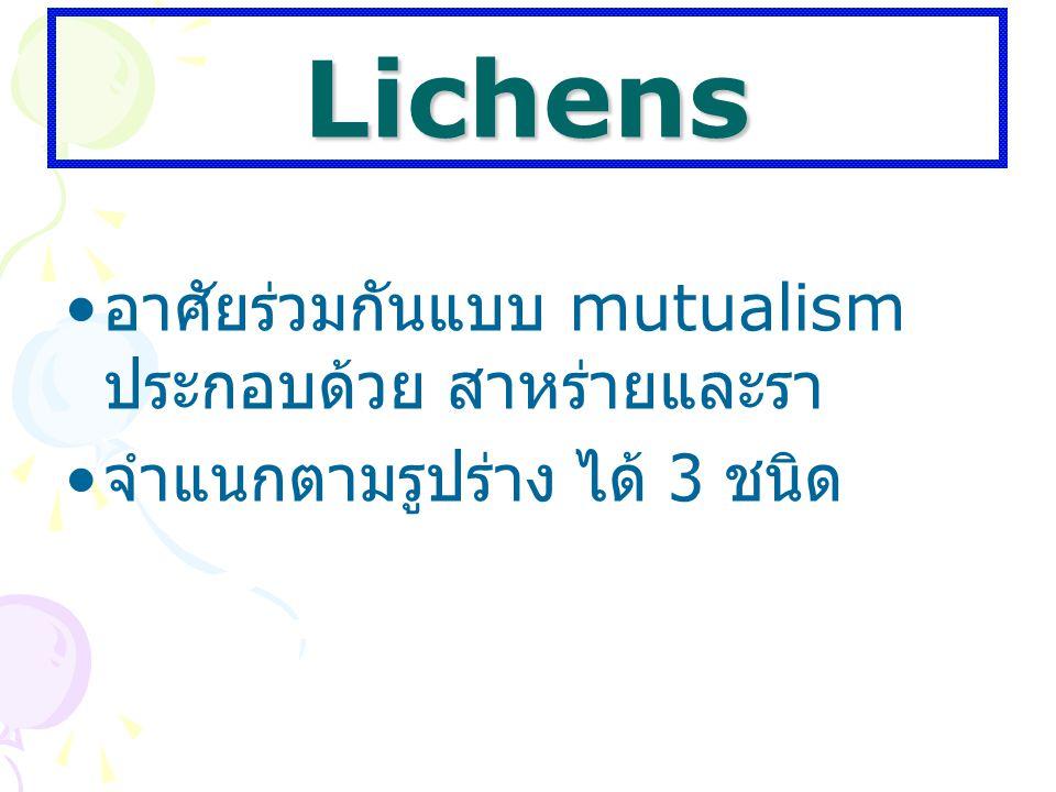 Lichens อาศัยร่วมกันแบบ mutualism ประกอบด้วย สาหร่ายและรา จำแนกตามรูปร่าง ได้ 3 ชนิด