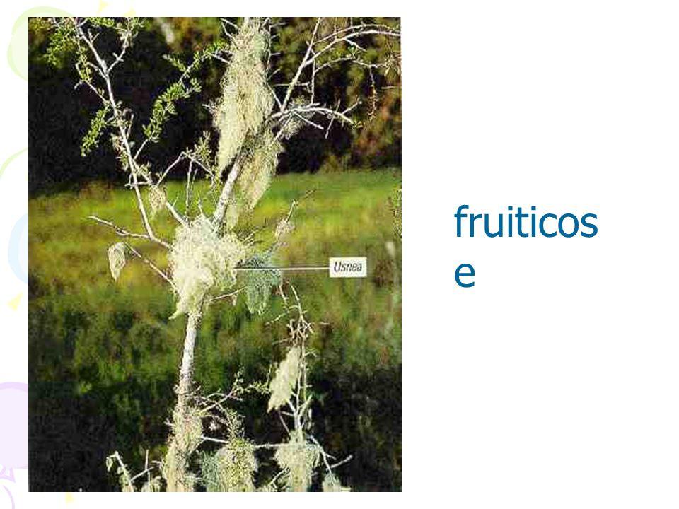 fruiticos e
