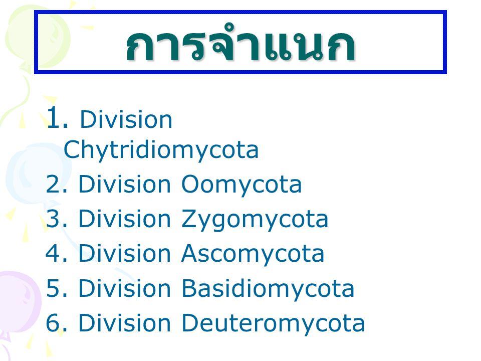 การจำแนก 1. Division Chytridiomycota 2. Division Oomycota 3. Division Zygomycota 4. Division Ascomycota 5. Division Basidiomycota 6. Division Deuterom