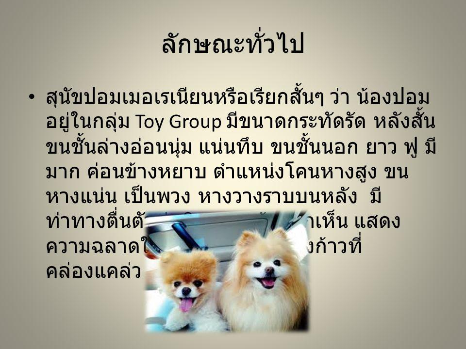 ลักษณะทั่วไป สุนัขปอมเมอเรเนียนหรือเรียกสั้นๆ ว่า น้องปอม อยู่ในกลุ่ม Toy Group มีขนาดกระทัดรัด หลังสั้น ขนชั้นล่างอ่อนนุ่ม แน่นทึบ ขนชั้นนอก ยาว ฟู ม