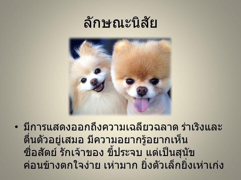 ลักษณะนิสัย มีการแสดงออกถึงความเฉลียวฉลาด ร่าเริงและ ตื่นตัวอยู่เสมอ มีความอยากรู้อยากเห็น ซื่อสัตย์ รักเจ้าของ ขี้ประจบ แต่เป็นสุนัข ค่อนข้างตกใจง่าย