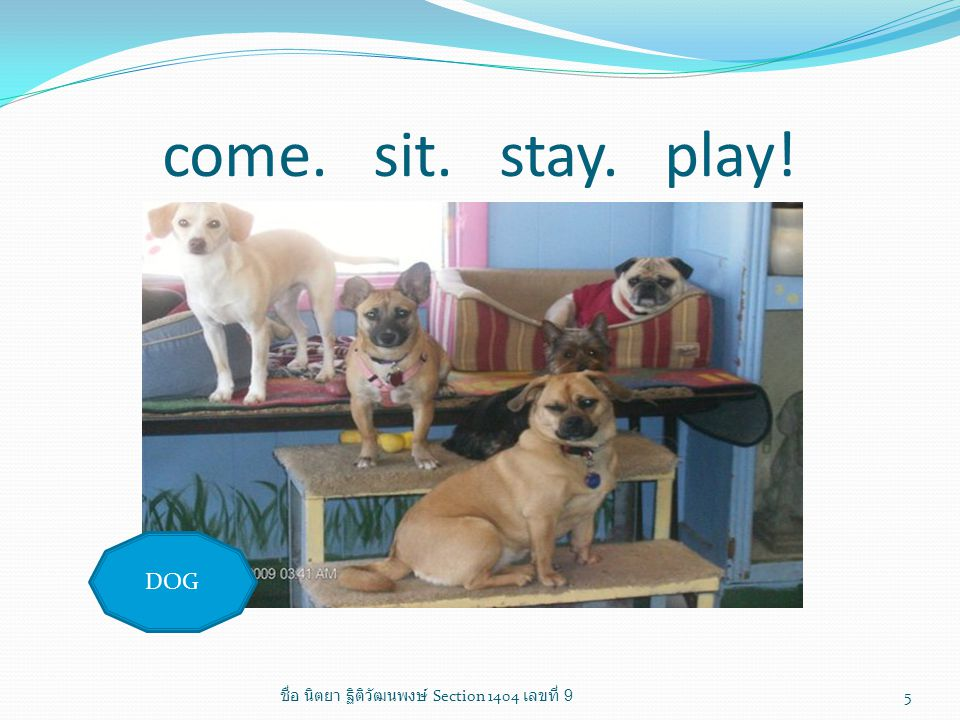 come. sit. stay. play! DOG 5 ชื่อ นิตยา ฐิติวัฒนพงษ์ Section 1404 เลขที่ 9