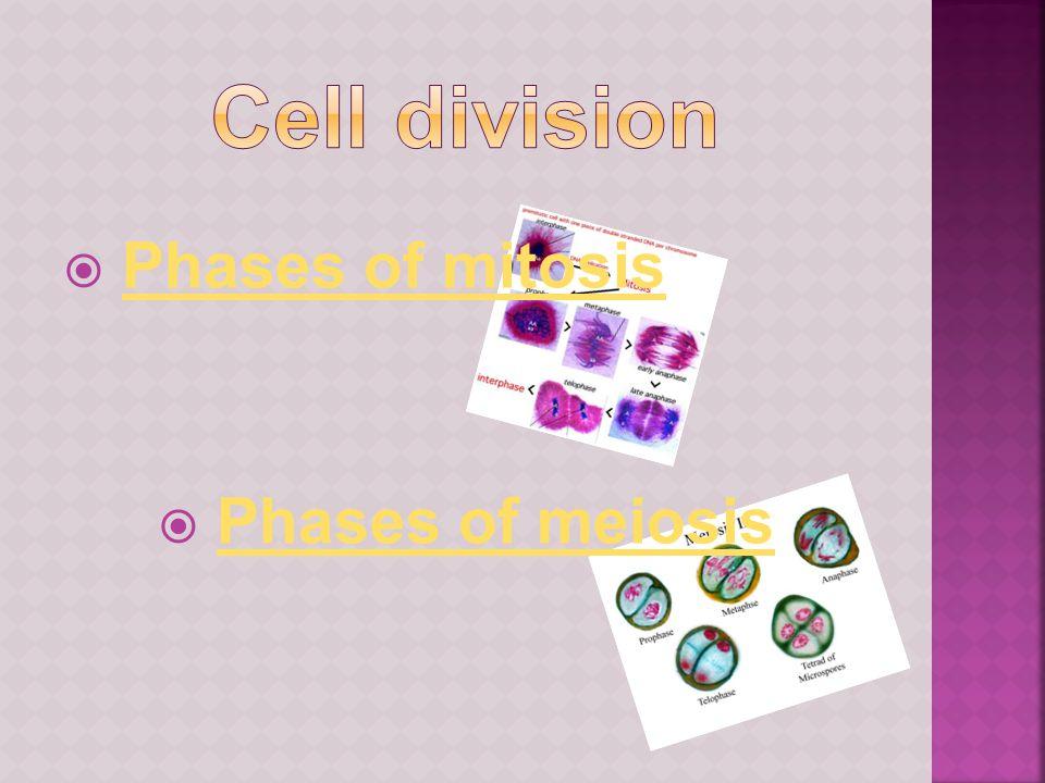  Phases of mitosisPhases of mitosis  Phases of meiosisPhases of meiosis