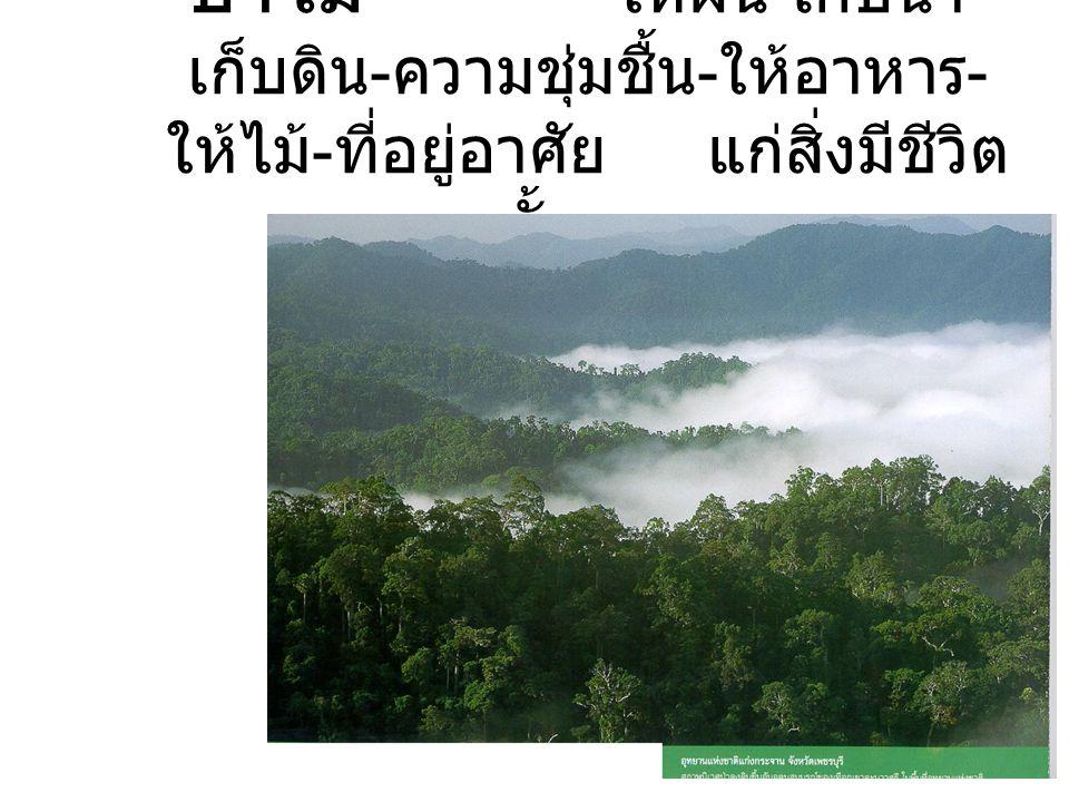 ป่าไม้ ให้ฝน - เก็บน้ำ - เก็บดิน - ความชุ่มชื้น - ให้อาหาร - ให้ไม้ - ที่อยู่อาศัย แก่สิ่งมีชีวิต ทั้งมวล