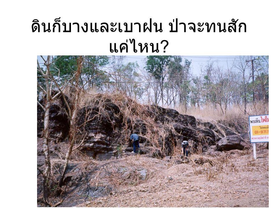 ดินก็บางและเบาฝน ป่าจะทนสัก แค่ไหน ?