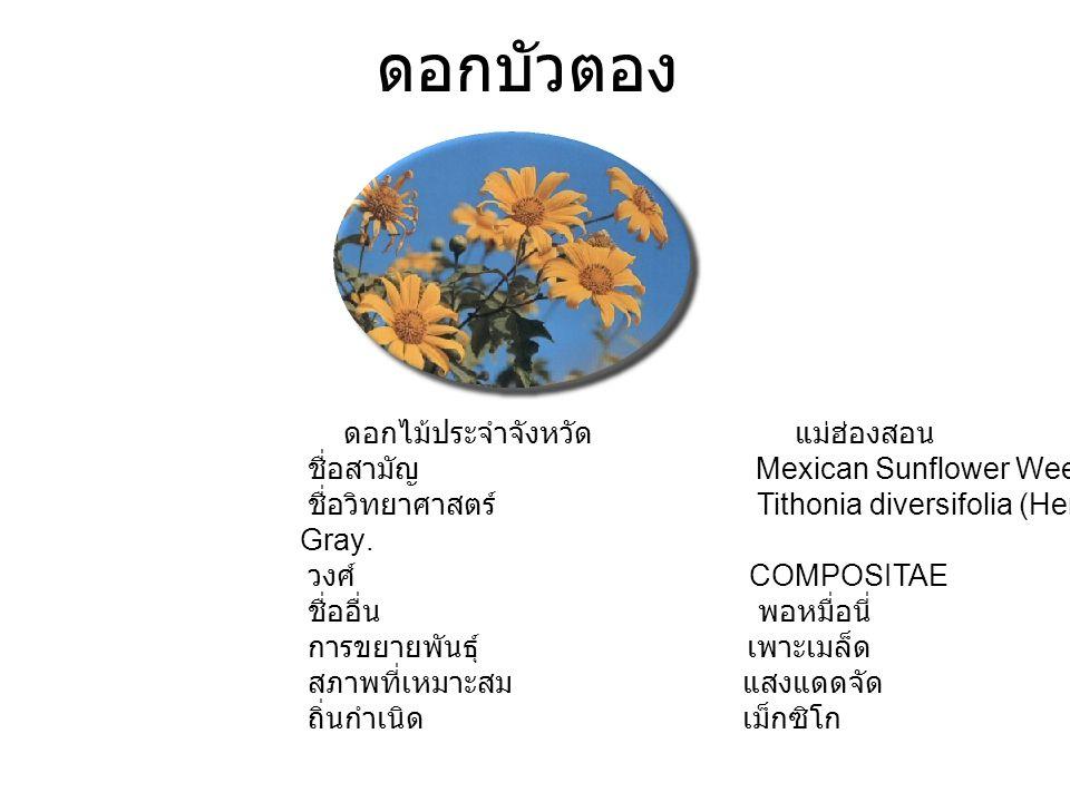 ดอกบัวตอง ดอกไม้ประจำจังหวัด แม่ฮ่องสอน ชื่อสามัญ Mexican Sunflower Weed ชื่อวิทยาศาสตร์ Tithonia diversifolia (Hemsl.) A. Gray. วงศ์ COMPOSITAE ชื่ออ