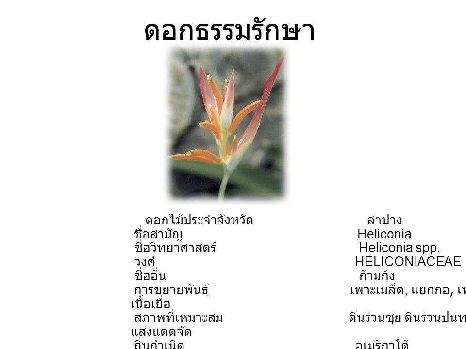 ดอกธรรมรักษา ดอกไม้ประจำจังหวัด ลำปาง ชื่อสามัญ Heliconia ชื่อวิทยาศาสตร์ Heliconia spp. วงศ์ HELICONIACEAE ชื่ออื่น ก้ามกุ้ง การขยายพันธุ์ เพาะเมล็ด,