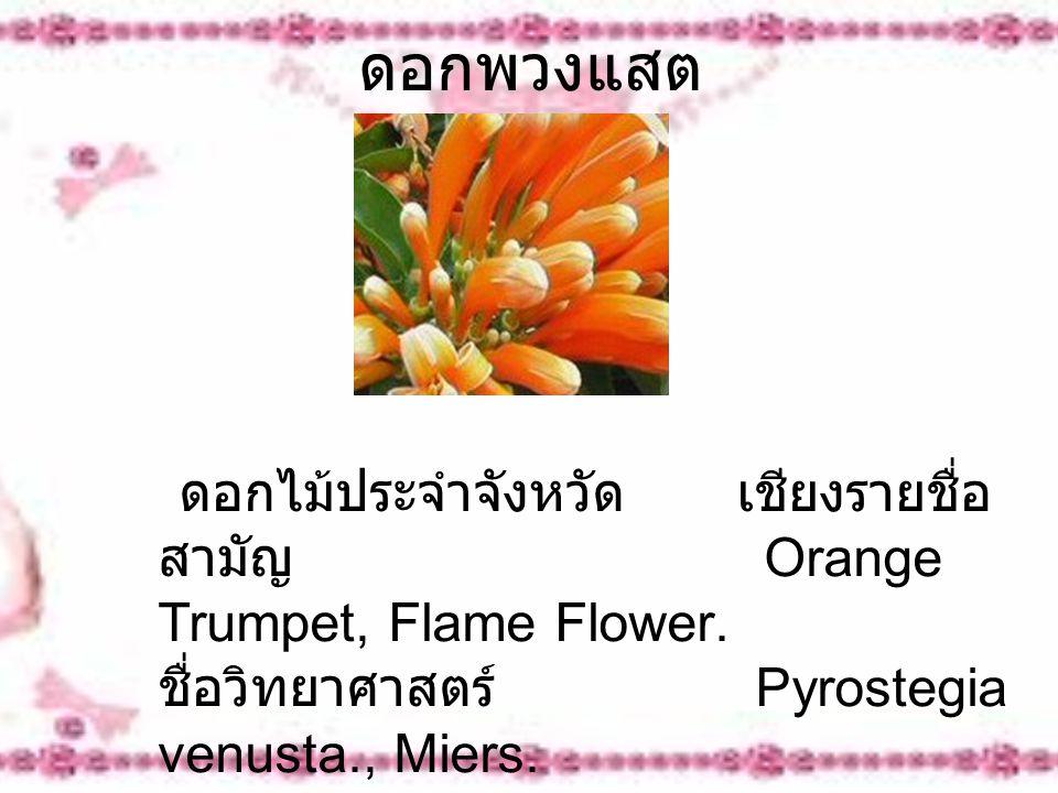 ดอกพวงแสต ดอกไม้ประจำจังหวัด เชียงรายชื่อ สามัญ Orange Trumpet, Flame Flower. ชื่อวิทยาศาสตร์ Pyrostegia venusta., Miers.