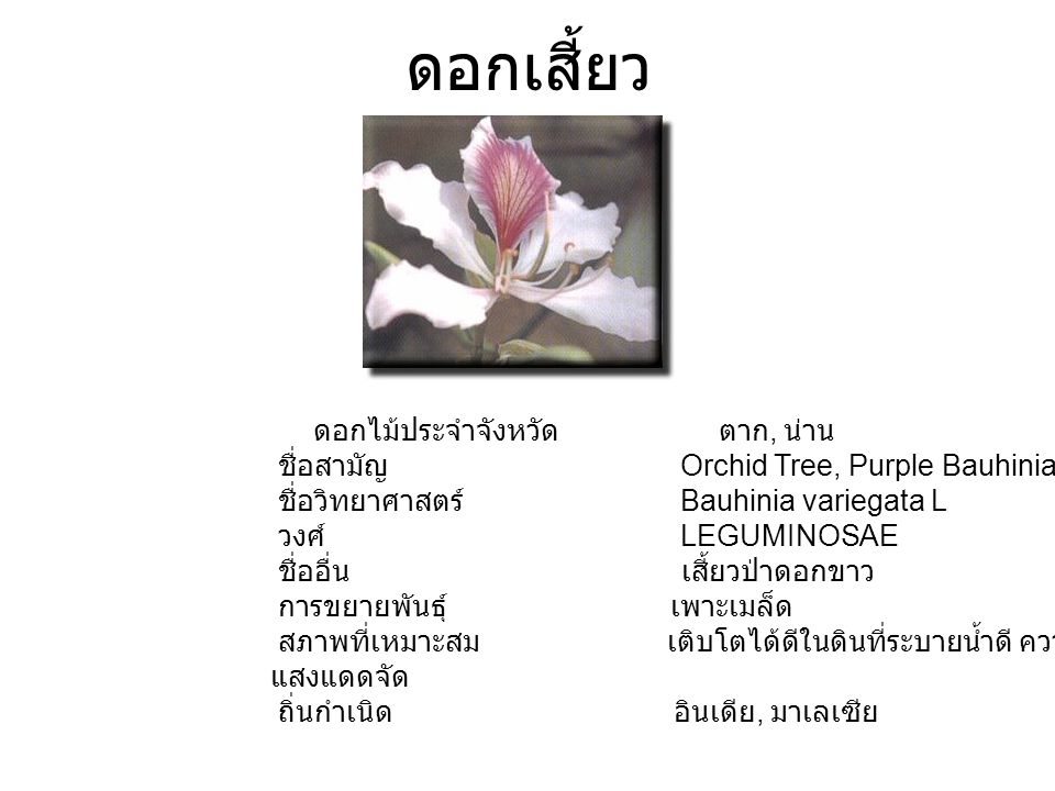 ดอกเสี้ยว ดอกไม้ประจำจังหวัด ตาก, น่าน ชื่อสามัญ Orchid Tree, Purple Bauhinia ชื่อวิทยาศาสตร์ Bauhinia variegata L วงศ์ LEGUMINOSAE ชื่ออื่น เสี้ยวป่าดอกขาว การขยายพันธุ์ เพาะเมล็ด สภาพที่เหมาะสม เติบโตได้ดีในดินที่ระบายน้ำดี ความชื้นสูง แสงแดดจัด ถิ่นกำเนิด อินเดีย, มาเลเซีย