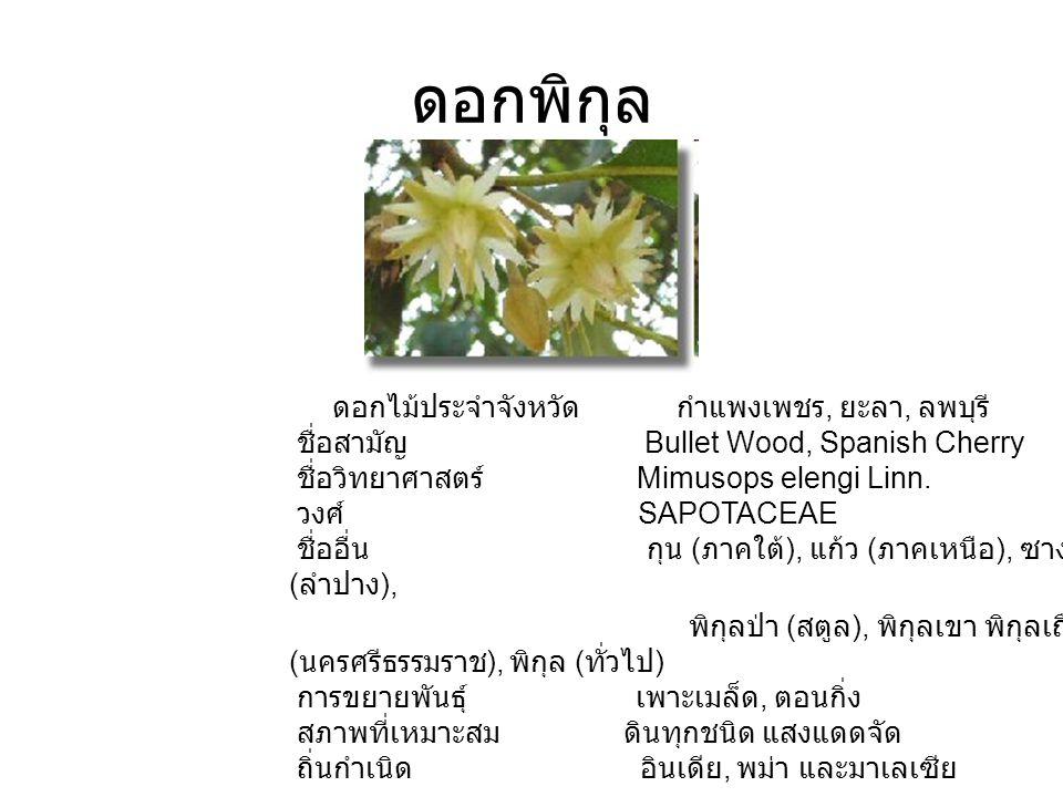 ดอกพิกุล ดอกไม้ประจำจังหวัด กำแพงเพชร, ยะลา, ลพบุรี ชื่อสามัญ Bullet Wood, Spanish Cherry ชื่อวิทยาศาสตร์ Mimusops elengi Linn. วงศ์ SAPOTACEAE ชื่ออื
