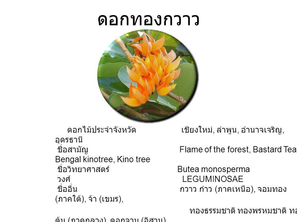 ดอกทองกวาว ดอกไม้ประจำจังหวัด เชียงใหม่, ลำพูน, อำนาจเจริญ, อุดรธานี ชื่อสามัญ Flame of the forest, Bastard Teak, Bengal kinotree, Kino tree ชื่อวิทยาศาสตร์ Butea monosperma วงศ์ LEGUMINOSAE ชื่ออื่น กวาว ก๋าว ( ภาคเหนือ ), จอมทอง ( ภาคใต้ ), จ้า ( เขมร ), ทองธรรมชาติ ทองพรหมชาติ ทอง ต้น ( ภาคกลาง ), ดอกจาน ( อิสาน ) การขยายพันธุ์ การเพาะเมล็ด สภาพที่เหมาะสม ดินร่วนซุย แสงแดดจัด ถิ่นกำเนิด อินเดีย