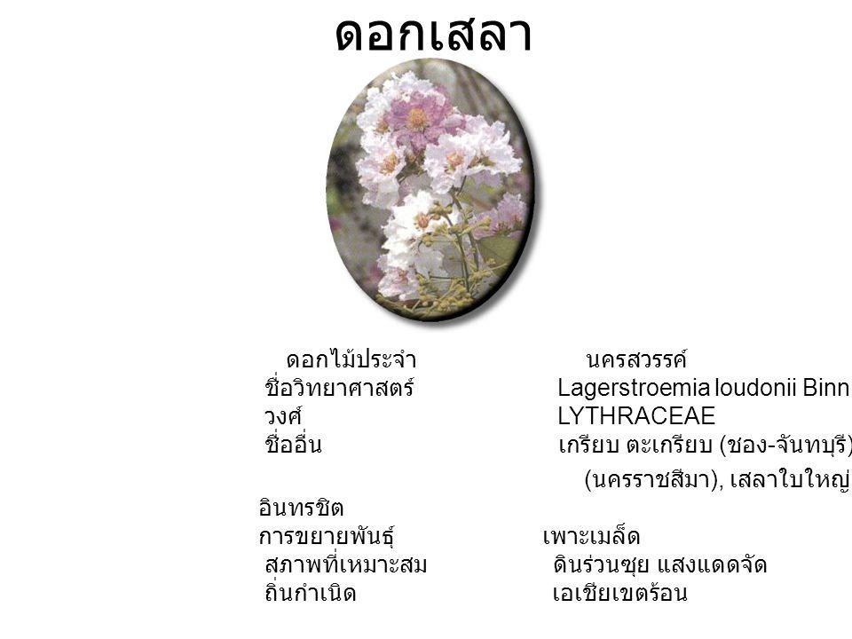 ดอกเสลา ดอกไม้ประจำ นครสวรรค์ ชื่อวิทยาศาสตร์ Lagerstroemia loudonii Binn. วงศ์ LYTHRACEAE ชื่ออื่น เกรียบ ตะเกรียบ ( ชอง - จันทบุรี ), ตะแบกขน ( นครร