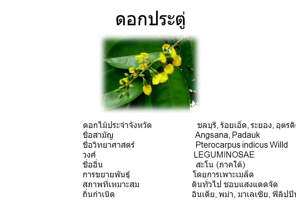 ดอกประตู่ ดอกไม้ประจำจังหวัด ชลบุรี, ร้อยเอ็ด, ระยอง, อุตรดิตถ์ ชื่อสามัญ Angsana, Padauk ชื่อวิทยาศาสตร์ Pterocarpus indicus Willd วงศ์ LEGUMINOSAE ชื่ออื่น สะโน ( ภาคใต้ ) การขยายพันธุ์ โดยการเพาะเมล็ด สภาพที่เหมาะสม ดินทั่วไป ชอบแสงแดดจัด ถิ่นกำเนิด อินเดีย, พม่า, มาเลเซีย, ฟิลิปปินส์