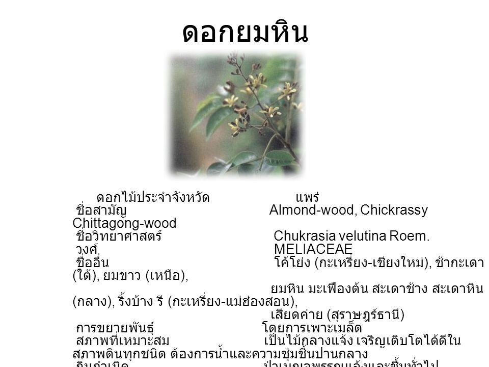ดอกยมหิน ดอกไม้ประจำจังหวัด แพร่ ชื่อสามัญ Almond-wood, Chickrassy Chittagong-wood ชื่อวิทยาศาสตร์ Chukrasia velutina Roem. วงศ์ MELIACEAE ชื่ออื่น โค