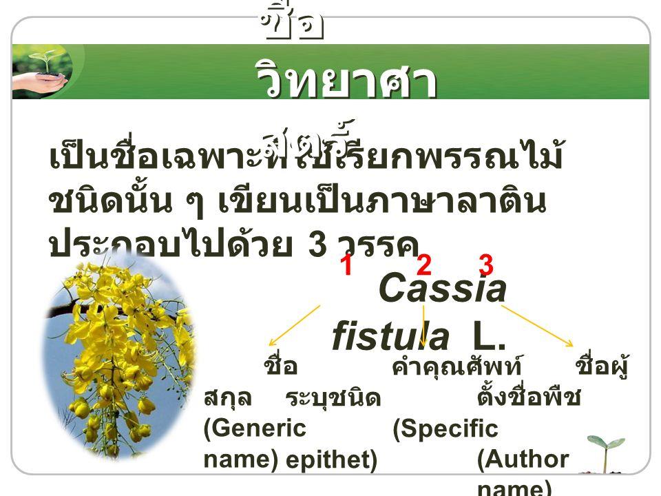 เป็นชื่อเฉพาะที่ใช้เรียกพรรณไม้ ชนิดนั้น ๆ เขียนเป็นภาษาลาติน ประกอบไปด้วย 3 วรรค Cassia fistula L. ชื่อ สกุล (Generic name) 12 คำคุณศัพท์ ระบุชนิด (S
