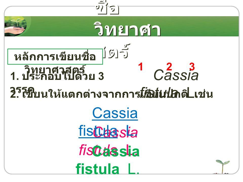 หลักการเขียนชื่อ วิทยาศาสตร์ 1. ประกอบไปด้วย 3 วรรค 2. เขียนให้แตกต่างจากการเขียนปกติ เช่น Cassia fistula L. 123