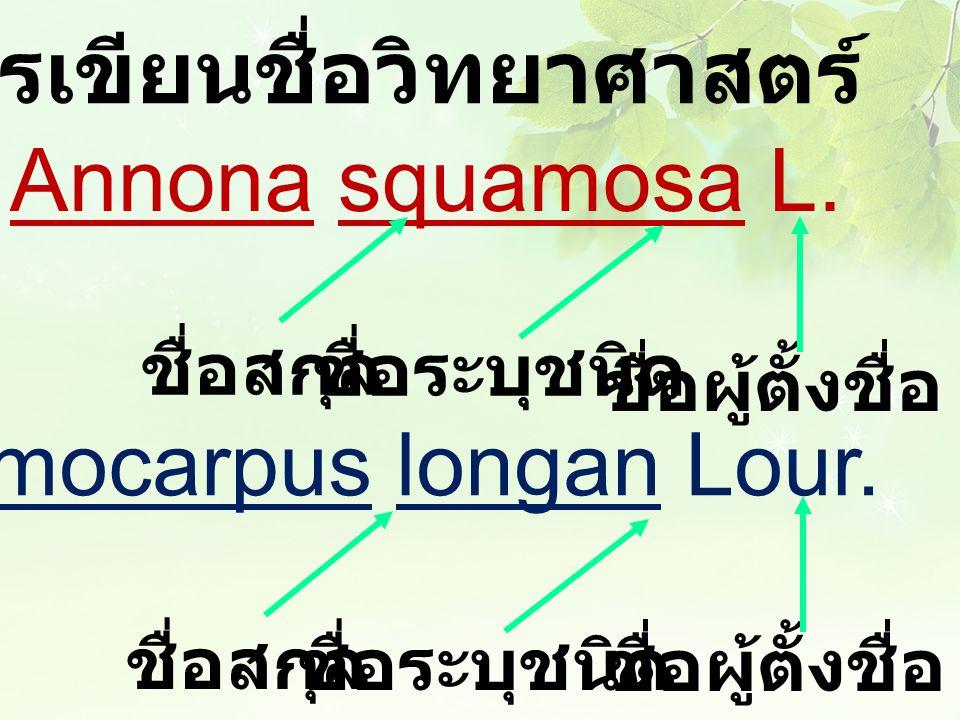 ตัวอย่างการเขียนชื่อวิทยาศาสตร์ น้อยหน่า Annona squamosa L. ลำไย Dimocarpus longan Lour. ชื่อผู้ตั้งชื่อ ชื่อสกุล ชื่อระบุชนิด ชื่อสกุล ชื่อระบุชนิด ช