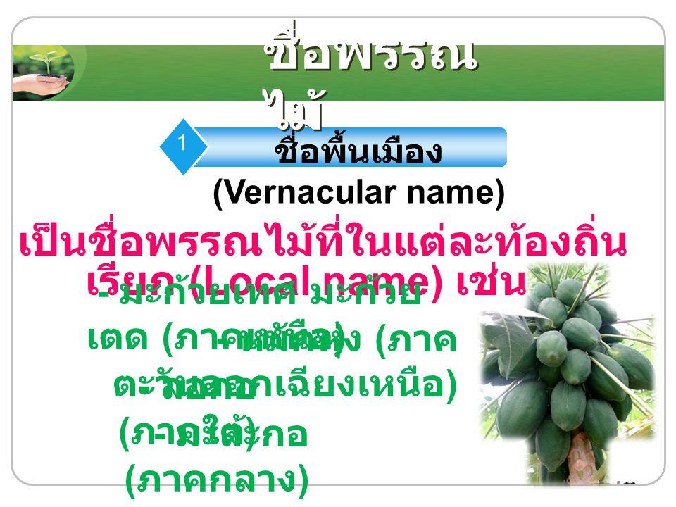 ชื่อพื้นเมือง (Vernacular name) 1 เป็นชื่อพรรณไม้ที่ในแต่ละท้องถิ่น เรียก (Local name) เช่น ชื่อพรรณ ไม้ - มะก้วยเทศ มะก้วย เตด ( ภาคเหนือ ) - หมักหุ่