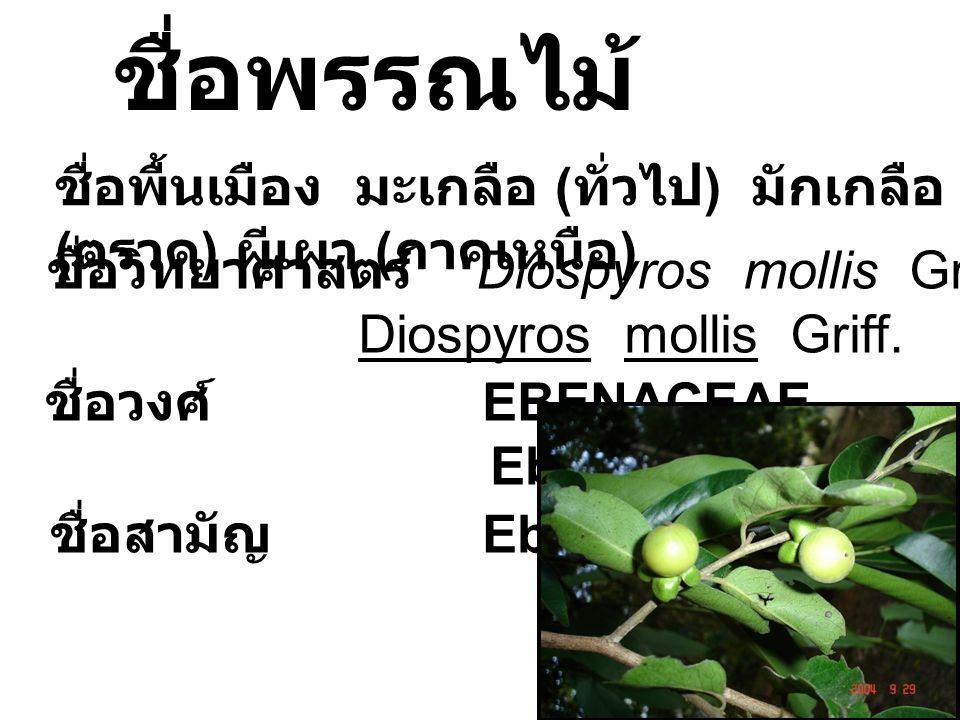 ชื่อพื้นเมือง มะเกลือ ( ทั่วไป ) มักเกลือ ( ตราด ) ผีเผา ( ภาคเหนือ ) ชื่อพรรณไม้ ชื่อวิทยาศาสตร์ Diospyros mollis Griff. Diospyros mollis Griff. ชื่อ