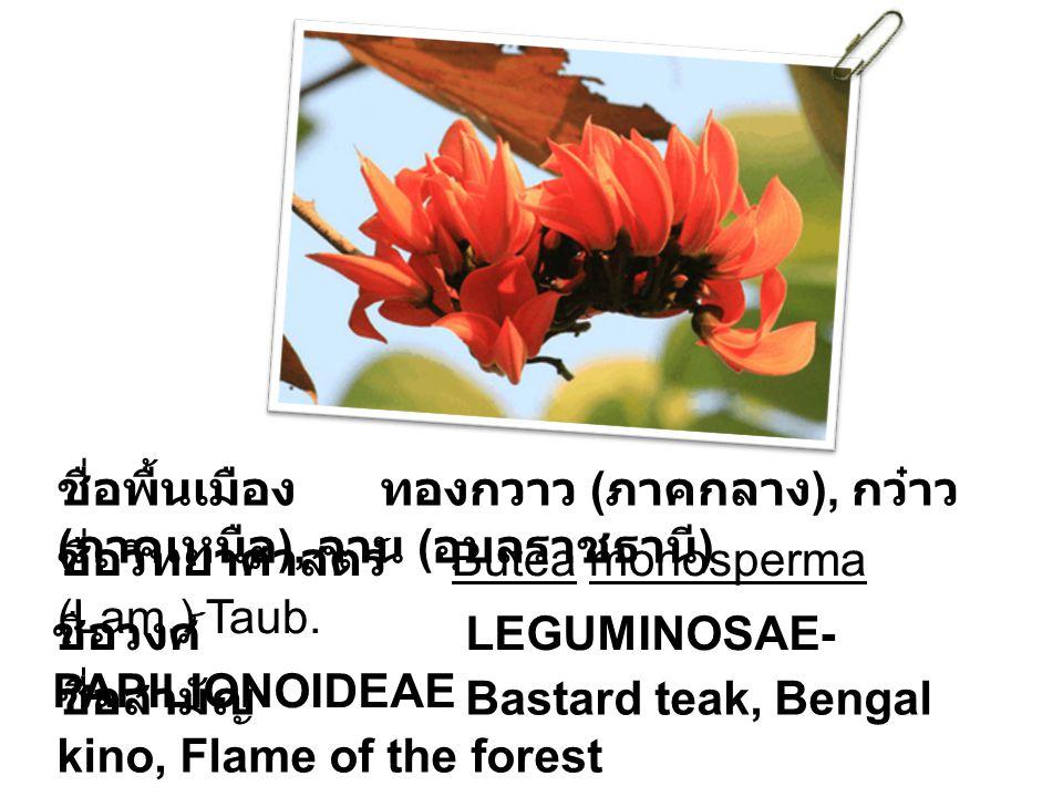 ชื่อพื้นเมือง ทองกวาว ( ภาคกลาง ), กว๋าว ( ภาคเหนือ ), จาน ( อุบลราชธานี ) ชื่อวิทยาศาสตร์ Butea monosperma (Lam.) Taub. ชื่อวงศ์ LEGUMINOSAE- PAPILIO