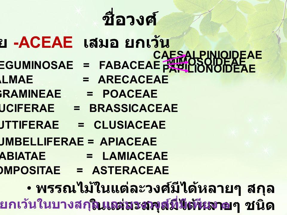 ชื่อวงศ์ พรรณไม้ในแต่ละวงศ์มีได้หลายๆ สกุล ในแต่ละสกุลมีได้หลายๆ ชนิด มีข้อยกเว้นในบางสกุล และบางวงศ์ที่มีเพียง ๑ ลงท้ายด้วย -ACEAE เสมอ ยกเว้น ๑. LEG