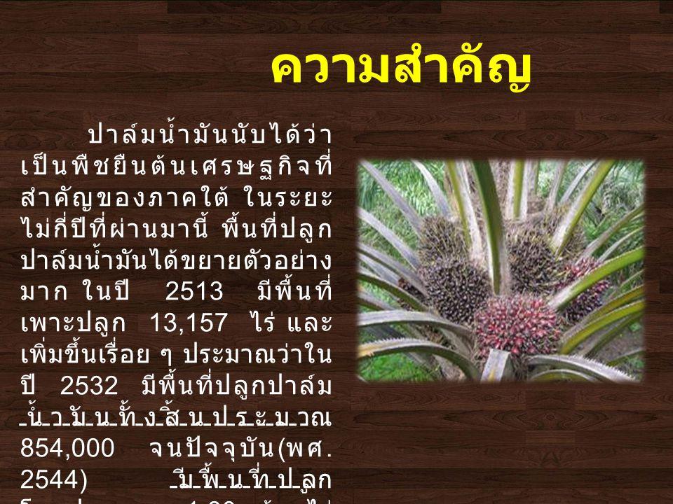 ปาล์มน้ำมันนับได้ว่า เป็นพืชยืนต้นเศรษฐกิจที่ สำคัญของภาคใต้ ในระยะ ไม่กี่ปีที่ผ่านมานี้ พื้นที่ปลูก ปาล์มน้ำมันได้ขยายตัวอย่าง มาก ในปี 2513 มีพื้นที่ เพาะปลูก 13,157 ไร่ และ เพิ่มขึ้นเรื่อย ๆ ประมาณว่าใน ปี 2532 มีพื้นที่ปลูกปาล์ม น้ำมันทั้งสิ้นประมาณ 854,000 จนปัจจุบัน ( พศ.