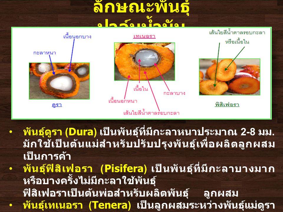 ลักษณะพันธุ์ ปาล์มน้ำมัน พันธุ์ดูรา (Dura) เป็นพันธุ์ที่มีกะลาหนาประมาณ 2-8 มม.