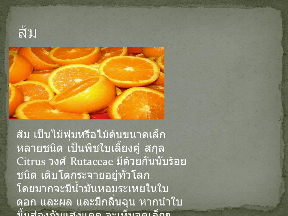 ส้ม เป็นไม้พุ่มหรือไม้ต้นขนาดเล็ก หลายชนิด เป็นพืชใบเลี้ยงคู่ สกุล Citrus วงศ์ Rutaceae มีด้วยกันนับร้อย ชนิด เติบโตกระจายอยู่ทั่วโลก โดยมากจะมีน้ำมัน