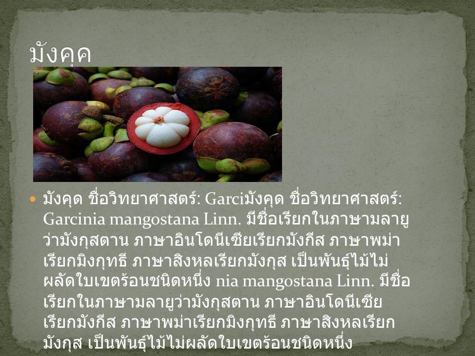 มังคุด ชื่อวิทยาศาสตร์ : Garci มังคุด ชื่อวิทยาศาสตร์ : Garcinia mangostana Linn. มีชื่อเรียกในภาษามลายู ว่ามังกุสตาน ภาษาอินโดนีเซียเรียกมังกีส ภาษาพ