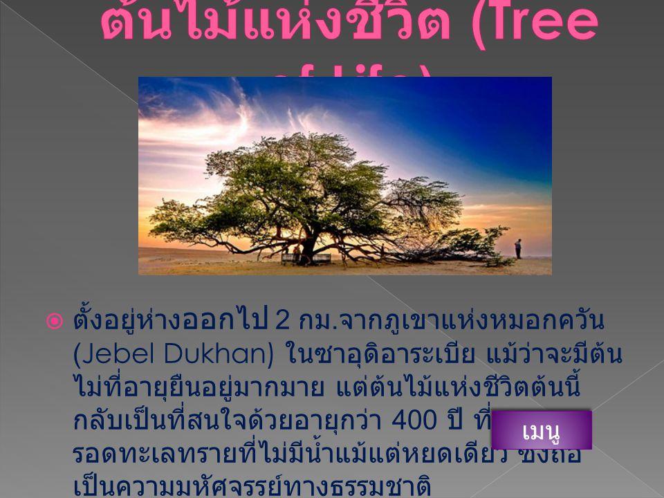 ต้นไม้แห่ง ชีวิต ต้นไม้แห่ง ชีวิต ต้นยูคา ลิปตัสสีรุ้ง ต้นยูคา ลิปตัสสีรุ้ง ต้นไหมจุรี ( งิ้วสีชมพู ) ( ต้นไหมจุรี ( งิ้วสีชมพู ) ( Methuselah ต้นไม้จาก วัดตาพรหมจาก ต้นไม้จาก วัดตาพรหมจาก ต้นเบาบับ ต้นตุเล TulTree ต้นตุเล TulTree ต้นเลือด มังกร ต้นเลือด มังกร EliaBouybon AngelAngel Oak AngelAngel Oak บรรณานุก รม บรรณานุก รม