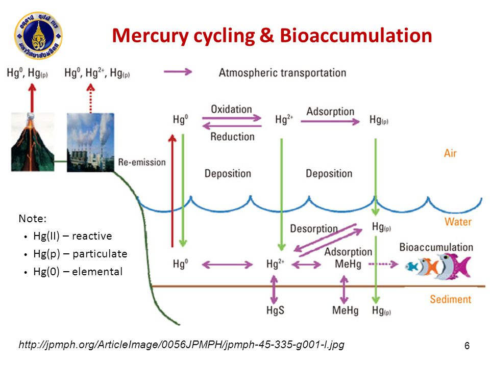 Mercury Transformation and Transport Hg 0 คงตัวในบรรยากาศได้นานเป็นปี Hg(II) จะตกสะสม (deposition) ได้ เร็วกว่า ระยะเวลาคงตัวในบรรยากาศ จึงเป็นเพียงระดับชั่วโมง จนถึงเป็น เดือน แต่ Hg(II) ที่ติดกับอนุภาค (Hg (p) ) ถ้า มีขนาดเล็กพอ จะคงตัวอยู่ใน บรรยากาศได้นานแบบเดียวกับ Hg 0 ผศ.