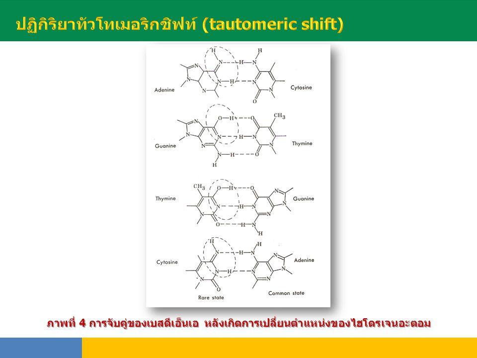 พันธุ์ ภาพที่ 4 การจับคู่ของเบสดีเอ็นเอ หลังเกิดการเปลี่ยนตำแหน่งของไฮโดรเจนอะตอม
