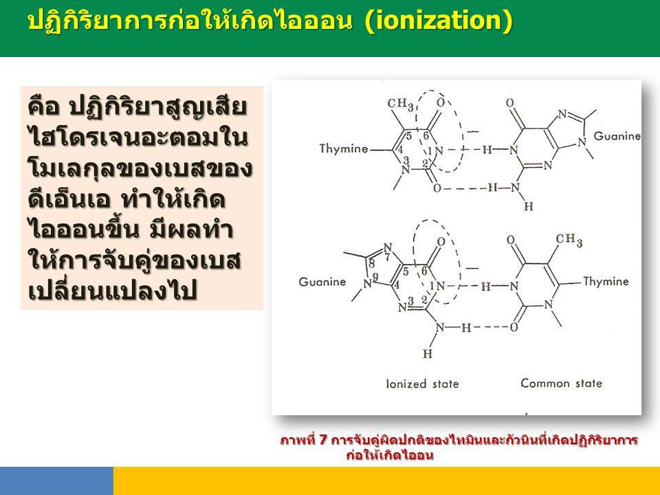 ปฏิกิริยาการก่อให้เกิดไอออน (ionization) พันธุ์ ภาพที่ 7 การจับคู่ผิดปกติของไทมินและกัวนินที่เกิดปฏิกิริยาการ ก่อให้เกิดไออน คือ ปฏิกิริยาสูญเสีย ไฮโด