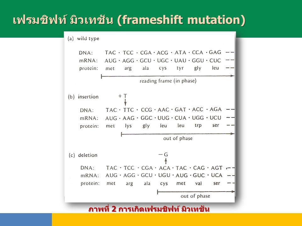 เฟรมชิฟท์ มิวเทชัน (frameshift mutation) พันธุ์ ภาพที่ 2 การเกิดเฟรมชิฟท์ มิวเทชัน