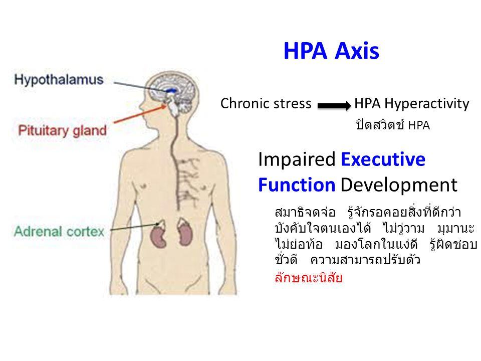 HPA Axis Chronic stress HPA Hyperactivity Impaired Executive Function Development ปิดสวิตช์ HPA สมาธิจดจ่อ รู้จักรอคอยสิ่งที่ดีกว่า บังคับใจตนเองได้ ไ