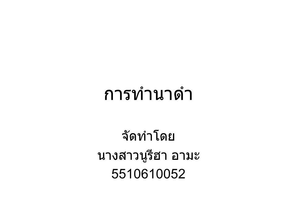 การทำนาดำ จัดทำโดย นางสาวนูรีฮา อามะ 5510610052