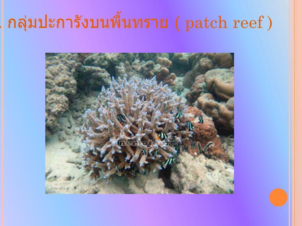 2. กลุ่มปะการังบนพื้นทราย ( patch reef )