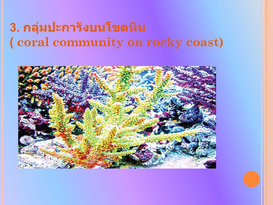 3. กลุ่มปะการังบนโขดหิน ( coral community on rocky coast)