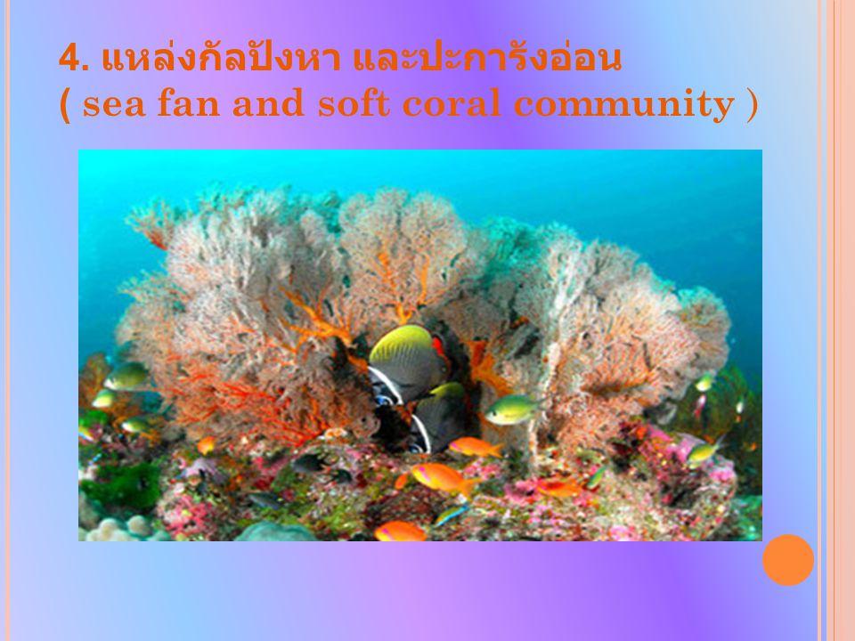4. แหล่งกัลปังหา และปะการังอ่อน ( sea fan and soft coral community )