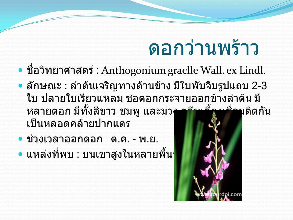 ดอกว่านพร้าว ชื่อวิทยาศาสตร์ : Anthogonium graclle Wall. ex Lindl. ลักษณะ : ลำต้นเจริญทางด้านข้าง มีใบพับจีบรูปแถบ 2-3 ใบ ปลายใบเรียวแหลม ช่อดอกกระจาย